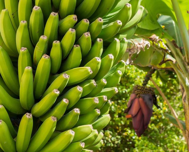夢占いバナナの木