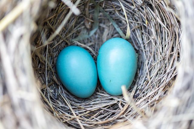夢占い青い卵