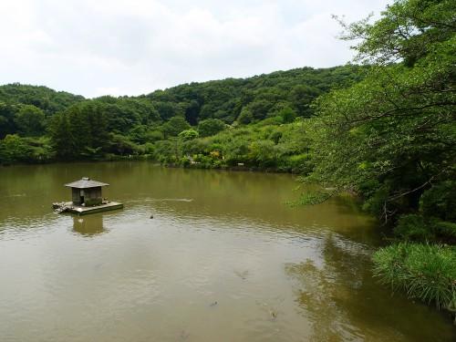 夢占い濁った池