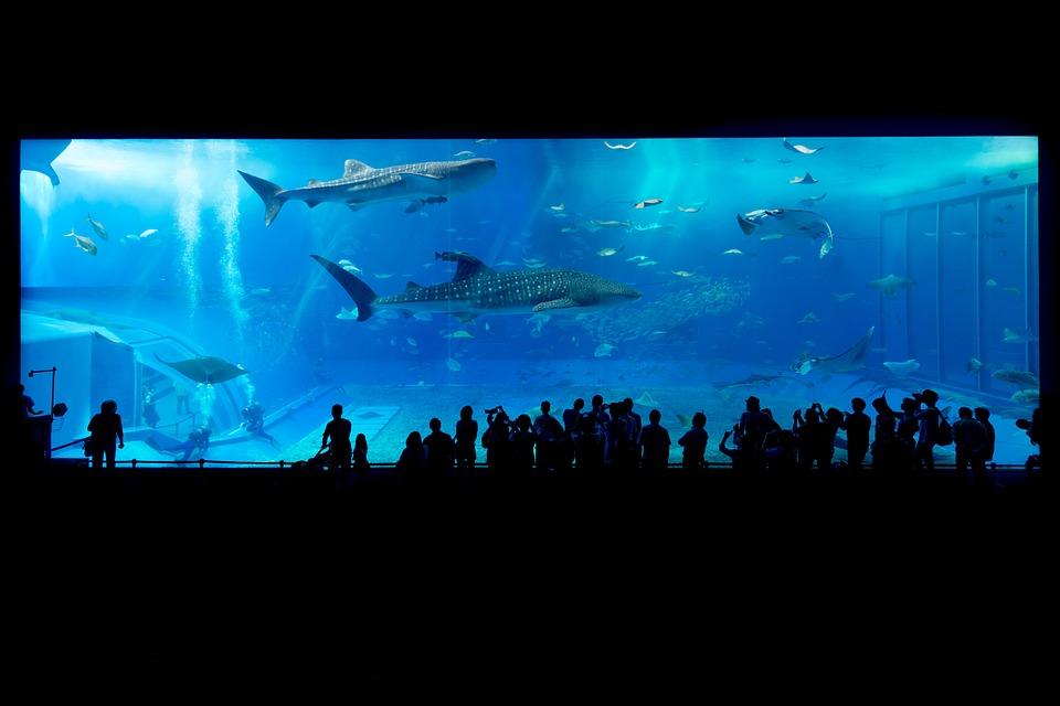 夢占い 水槽のサメ