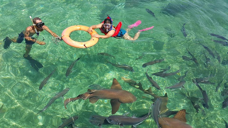 泳ぐサメの夢