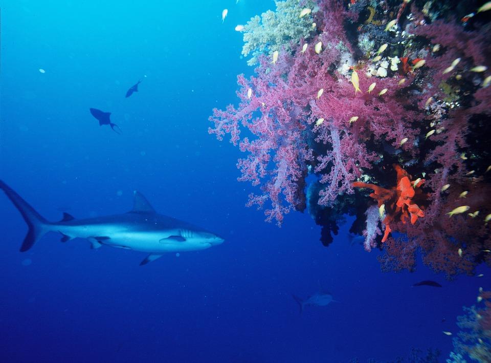 サメが泳ぐ夢