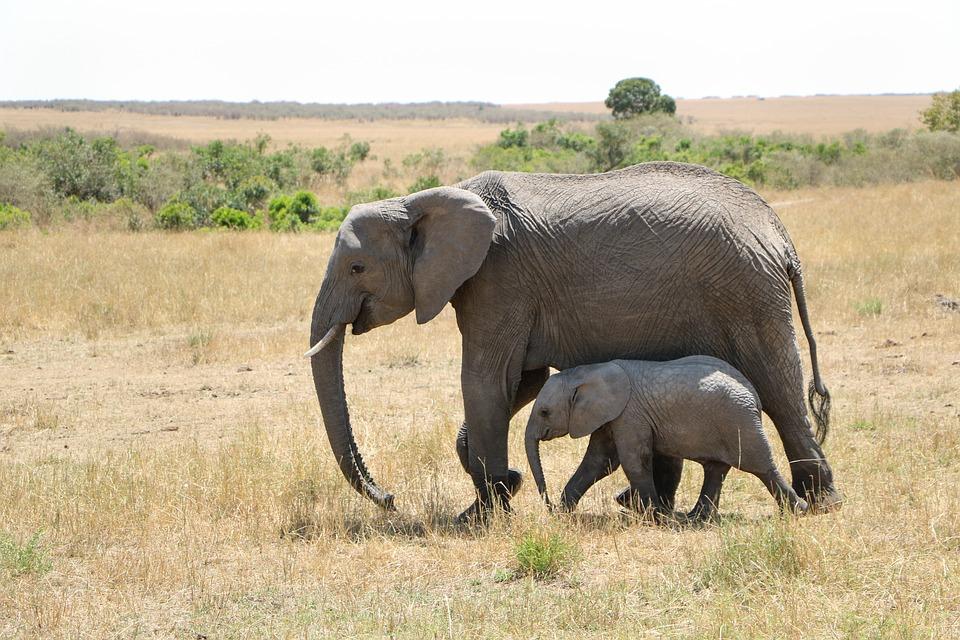 夢占い 象の親子