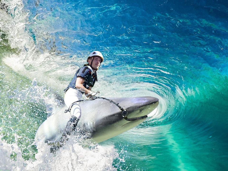 サメと泳ぐ夢