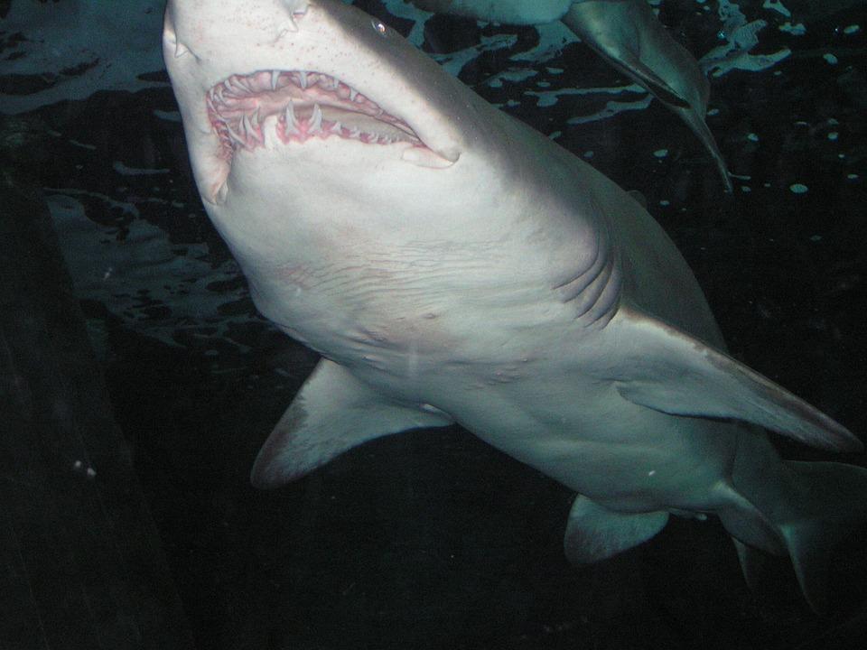 夢占い サメ