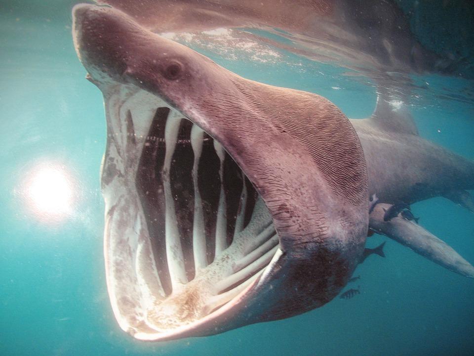 サメに食べられる夢