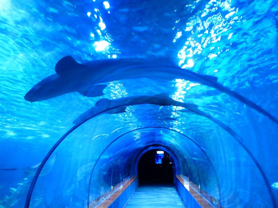 水槽のサメの夢