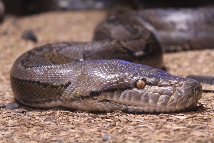 夢占い大蛇の意味
