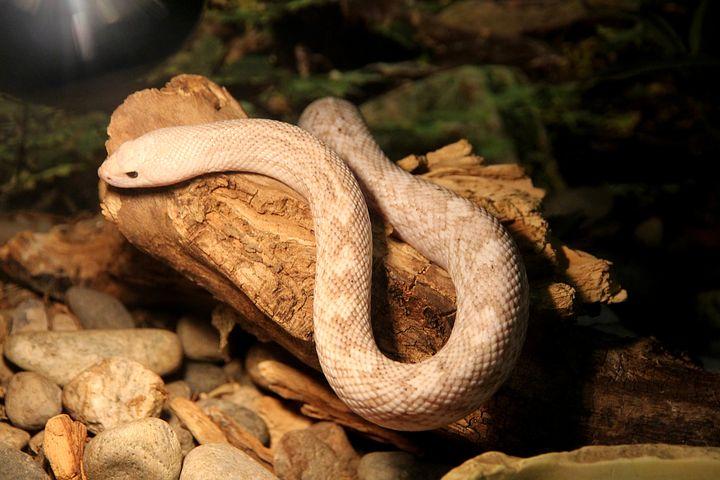 夢占い大蛇の意味4:白の大蛇