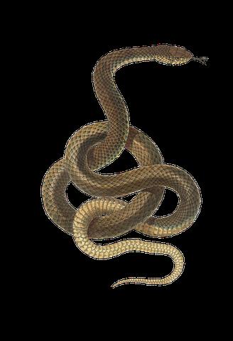 夢占い大蛇の意味5:金色の大蛇の夢