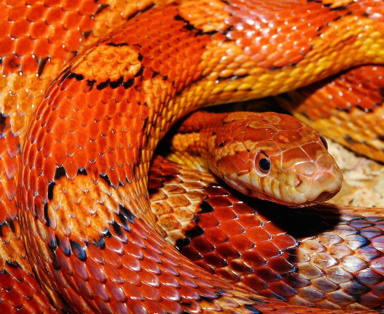 【夢占い】大蛇の夢の意味24選!黒・緑・抜け殻・白など   takajin