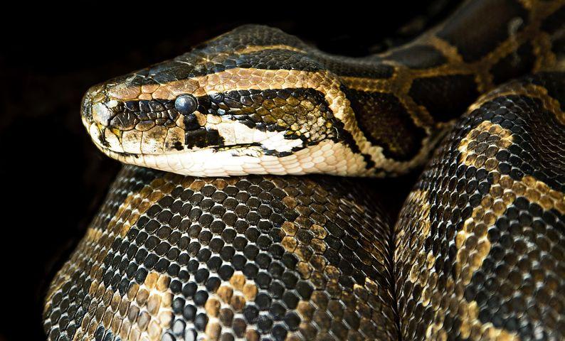 【夢占い】大蛇の夢の意味24選!黒・緑・抜け殻・白など