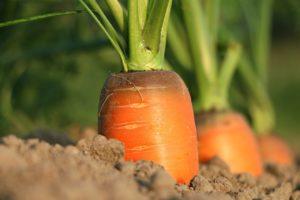 野菜を育てる・収穫する夢占い