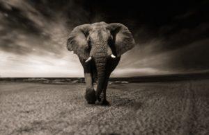 動物占いゾウの性格