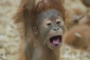 猿が騒ぐ・吠える夢占い