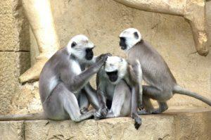 白い猿が現れる夢占い