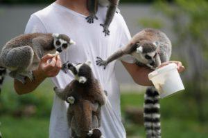 猿を飼う・餌をあげる夢占い