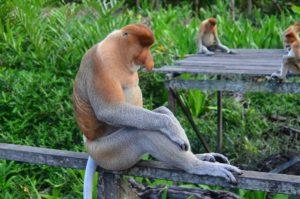 年を取った猿の夢占い