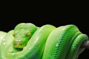 夢占い 蛇に噛まれる