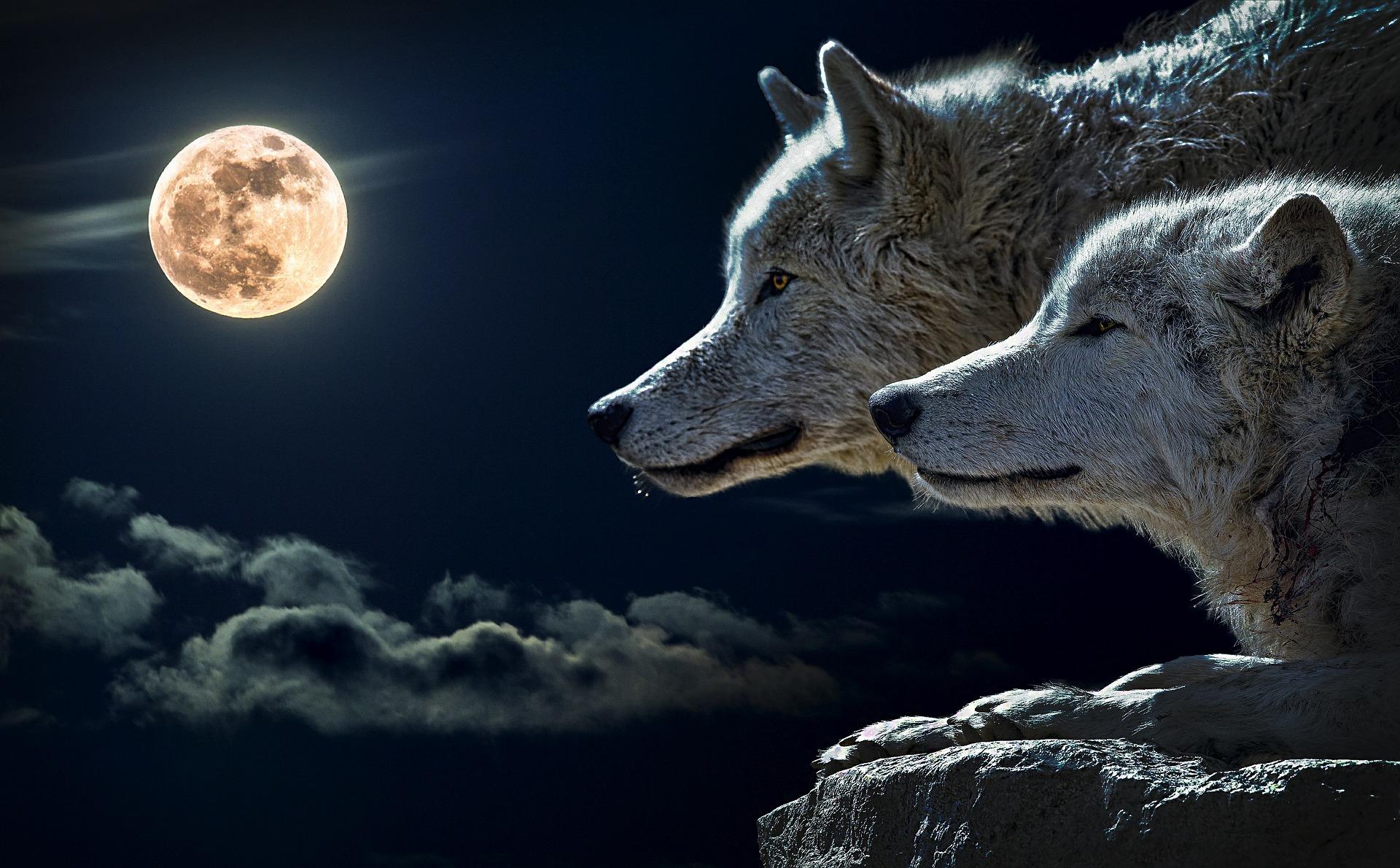夢占い 満月